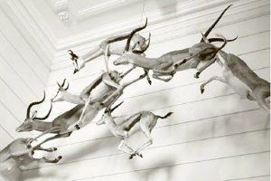 musée_histoire_naturelle_rochelle