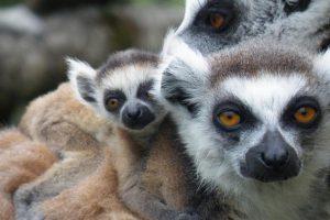AFdPZ-Association-francaise-des-parcs-zoologiques