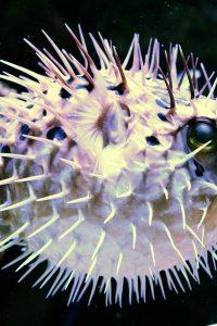 Aquarium-tropical-du-palais-de-la-porte-doree