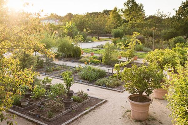 Jardin botanique cosm tique v g tale yves rocher amcsti for Rocher decoratif pour jardin