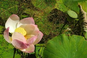 Jardins-botaniques-de-France-et-des-pays-francophones