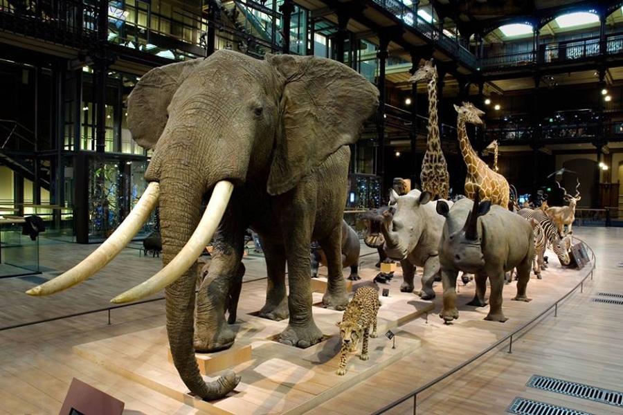 MNHN-Museum-national-d-Histoire-naturelle
