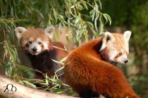 Parc zoologique d'Amiens