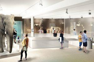 Museum Bordeaux (c) AVM muséographe - Basalt Architecture