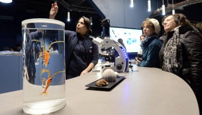 Médiation scientifique à Océanopolis, à Brest. | ARCHIVES THIERRY CREUX