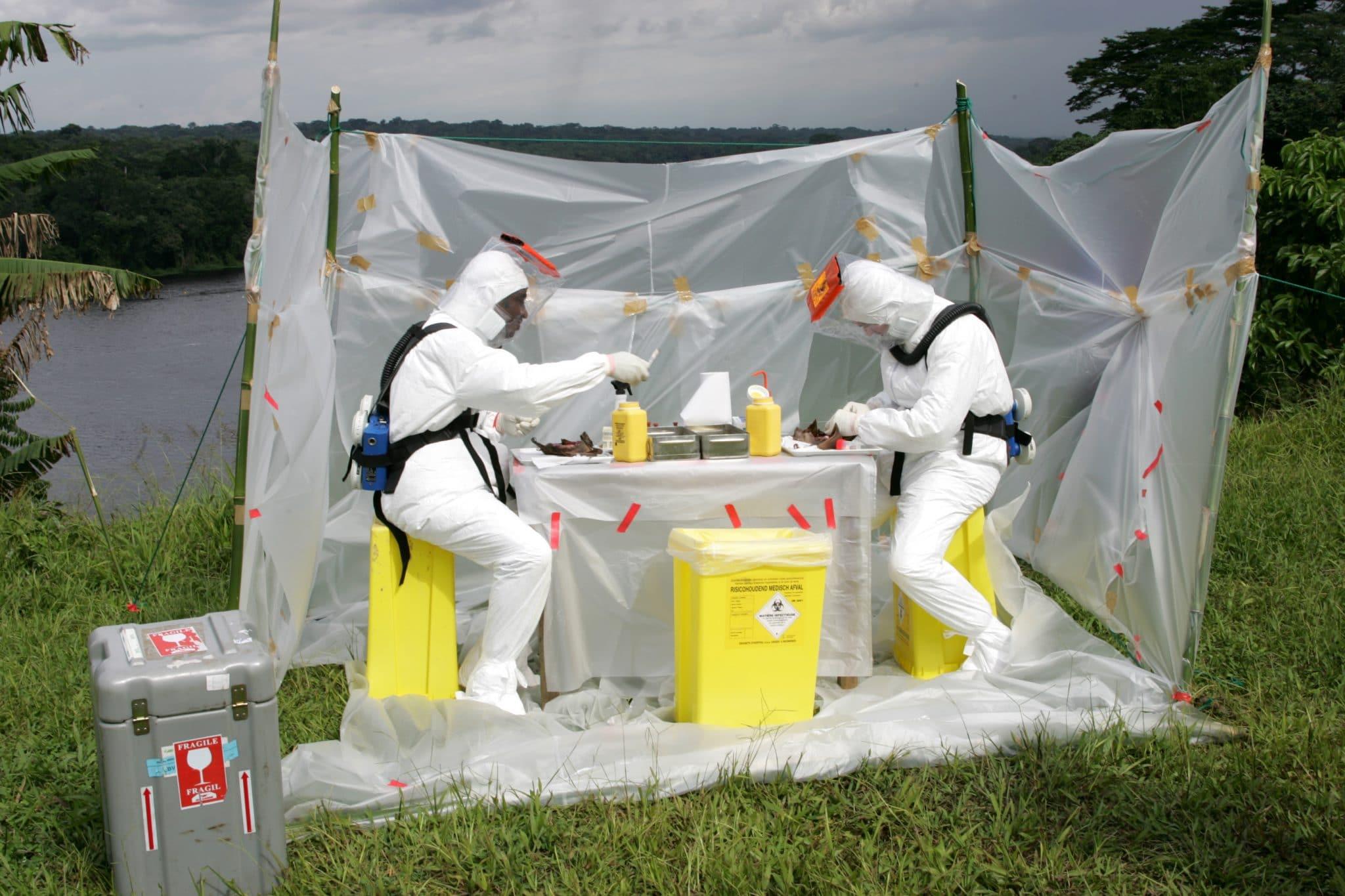 © IRD - Jean-Jacques Lemasson - Autopsies des chauves-souris sur le terrain dans un laboratoire de brousse, région de Lambaréné, Gabon.